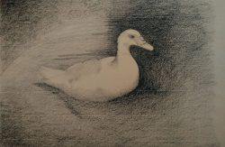 a-duck_charcoal