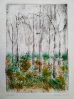 wild_woods