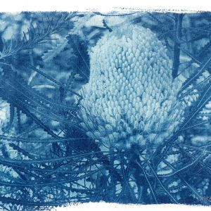 Original Cyanotype print