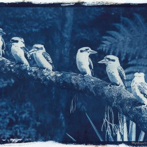 Original cyanotype print on watercolour paper