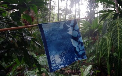 Mollie Bosworth contributes a flag for World Cyanotype Day.